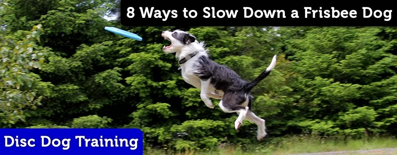 disc dog leaping tactics